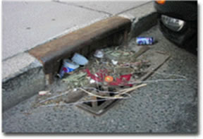 Debris in Catch Basin
